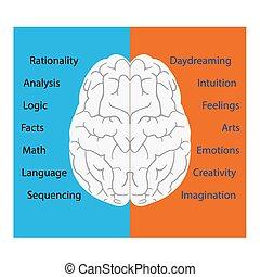 脳, ベクトル
