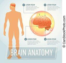 脳, ベクトル, 旗, イラスト, infographics