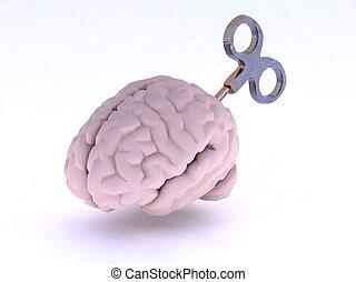 脳, 人間, キー