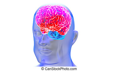 脳, 人間, render, 3d
