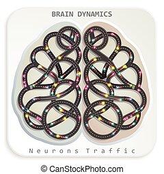 脳, 動的関係