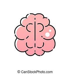脳, 半球, 権利, 人間, 左