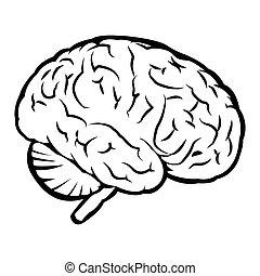 脳, 最も良く, 人間, 印