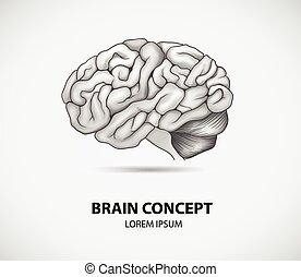 脳, 概念