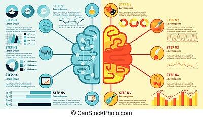 脳, 権利, 左, infographics