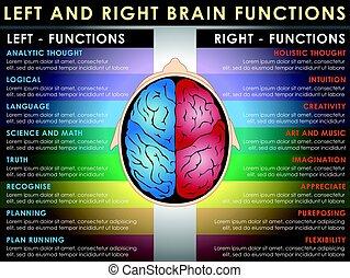 脳, 機能, 権利, 左