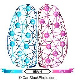 脳, 機能, 権利, conc, 左