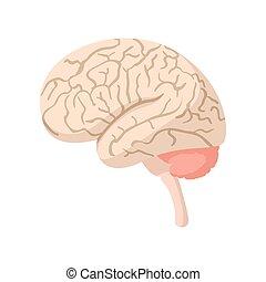 脳, 漫画, 人間, アイコン
