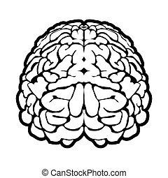 脳, 独特, 人間, 印