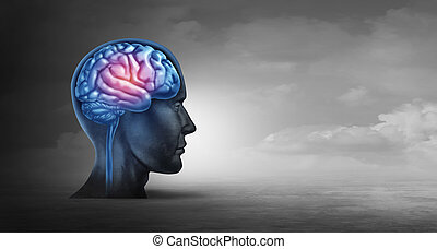 脳, 記憶