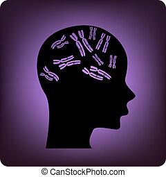 腦子, 基因
