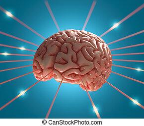 腦子, 能量