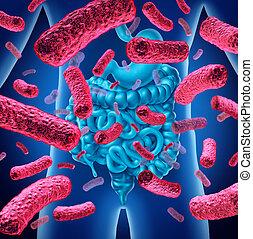 腸, 細菌