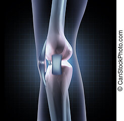 膝蓋, 解剖學