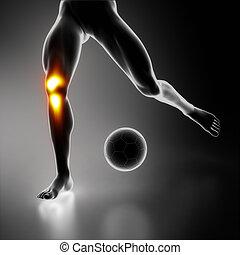 膝, スポーツ, 強調された, 接合箇所