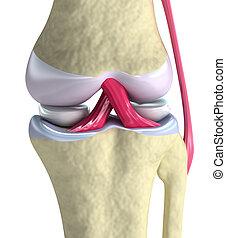 膝, ビュー。, クローズアップ, 隔離された, 接合箇所