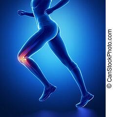 膝, 解剖学