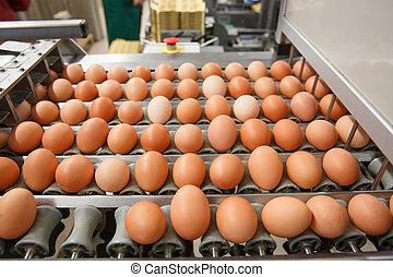 自動化された, 分類, の, 未加工, そして, 新鮮なチキン, 卵