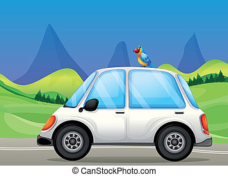 自動車, 白, 丘, 鳥