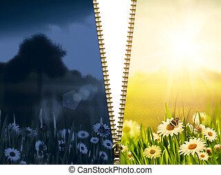 自然の美しさ, 背景, カモミール, 花, 日, night.