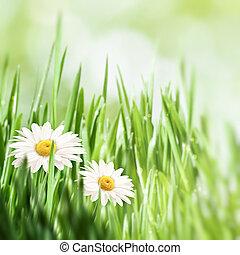 自然の美しさ, 背景, デザイン, カモミール, 花, あなたの