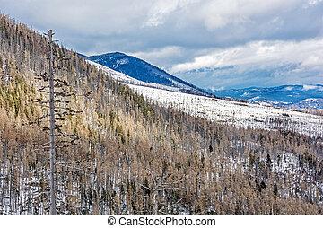 自然災害, 後で, 高く, 森林, トウヒ, tatras