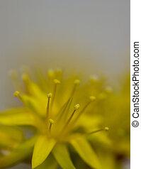 自然, そして, 花