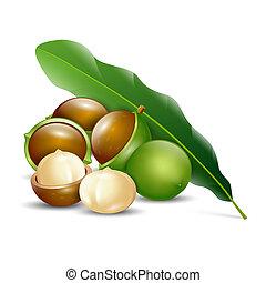 自然, ナット, 背景, 有機体である, 白, macadamia