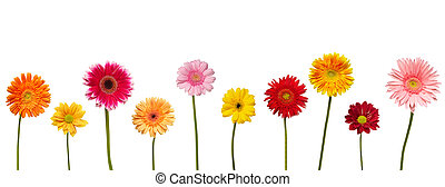 自然, 庭, デイジー, 花, 植物学, 花