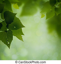 自然, 抽象的, 露, 緑, backgrounds., 朝, 葉