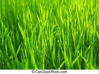自然, 春天, grass., 綠色的背景, 新鮮, 草