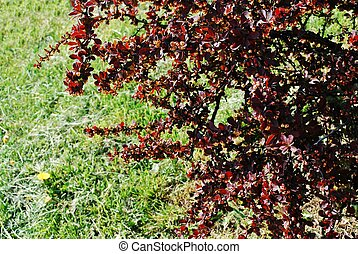 自然, 春, 抽象的, 背景, 季節, 草