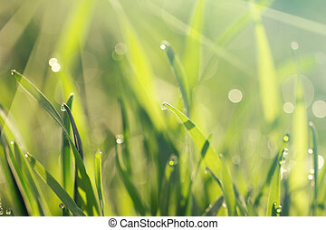 自然, 春, 露, 草, 背景, 新たに, 朝