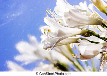 自然, 春, -, flowers., 背景, 花, 花