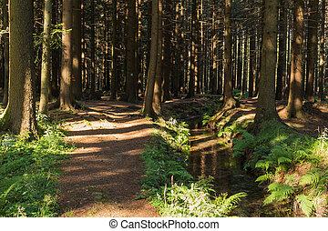 自然, 春, nature., 木, 火をつけられた, sunlight., 道, narrow, 柔らかい, 風景, 森林
