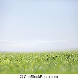 自然, 晴れわたった空, 緑の背景, 草