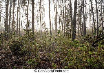 自然, 森林, 由于, 太陽, 偷看, 透過, teh, 樹