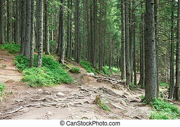 自然, 樹。, 背景, 陽光, 木頭, 綠色的森林