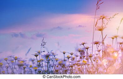 自然, 花の芸術, 日没, 夏, 上に, background;, 牧草地