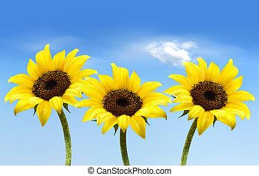 自然, 3, 黄色, ベクトル, 背景, sunflowers.