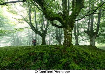 自然, belaustegui, 公园, gorbea, 绿色的森林