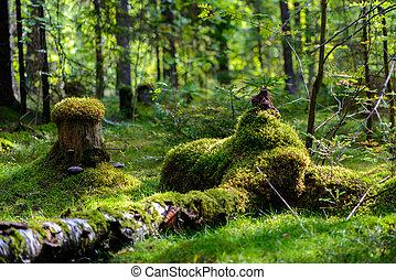 自然, forest., 様々, 森林, russia., 風景