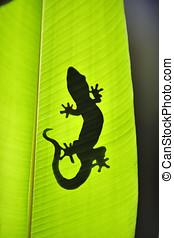 自然, gecko