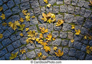 舗装, 葉, かえで