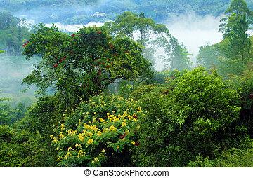 航空写真, ジャングル, 光景