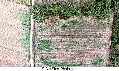航空写真, 田舎, -, トスカーナ, 光景, イタリア