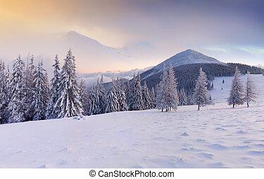 色彩丰富, 冬季, 日出, 在中, the, 山。