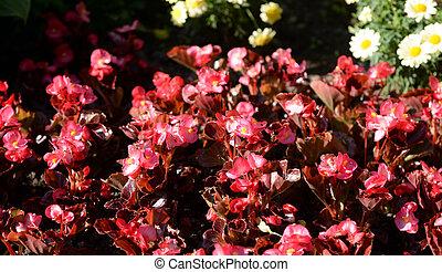 色彩丰富, 花, 在中, 夏天, park.