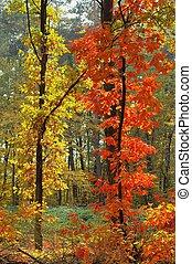 色, の, 秋