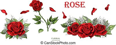 色, バラ, set., 隔離された, 手, ばら, 背景, 引かれる, 白い花, 赤